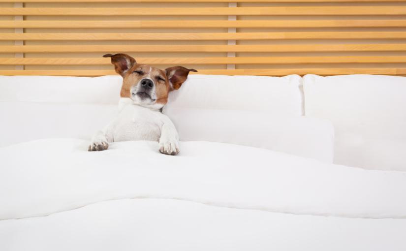 Trazendo o conforto no atendimento em hotéis para cachorro