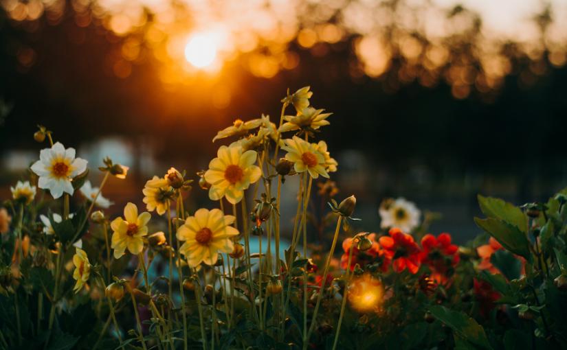 A beleza das flores, conheça o mercado que está em crescente