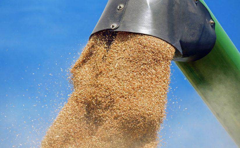 Mundo dos grãos: do campo à indústria