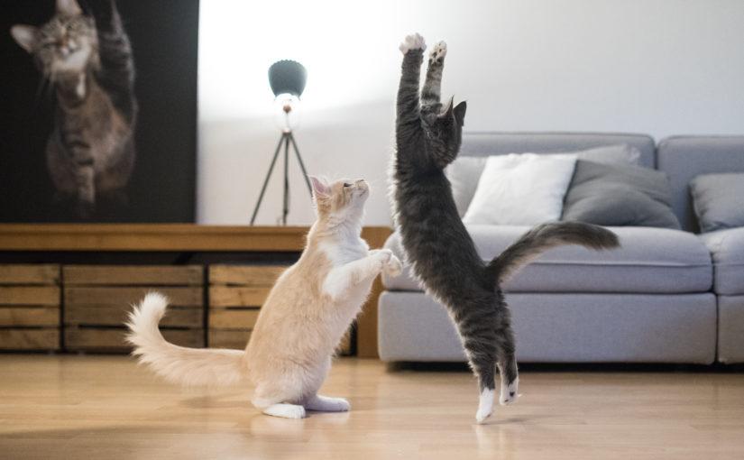 Hospedagem para gatos: saiba como funciona e os benefícios